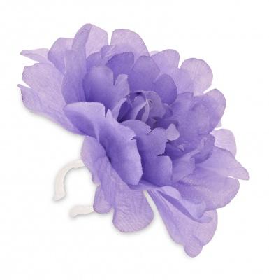 Basil Lenkerblume Peony lavendel